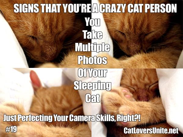 Crazy Cat Person Meme #19 - More at: CatLoversUnite.net