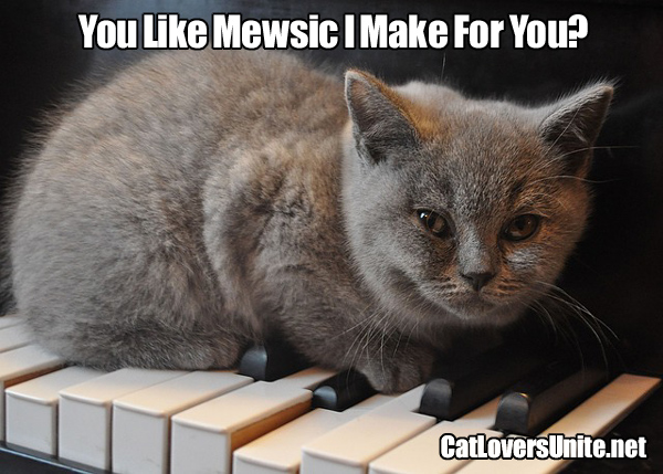 Cute photo of a cat on piano keys