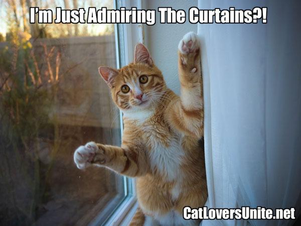 A cat admiring the curtains meme