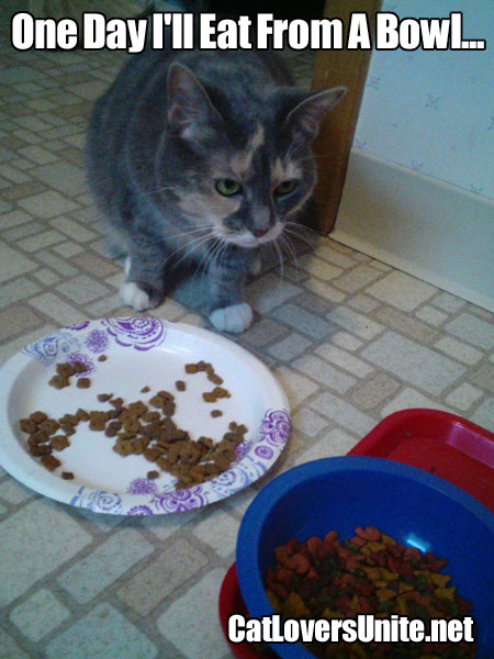 A cat who thinks the bowl of food looks better than its food.