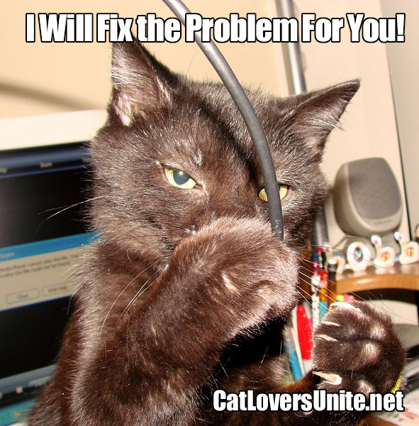 Photo of a cat with a computer cable