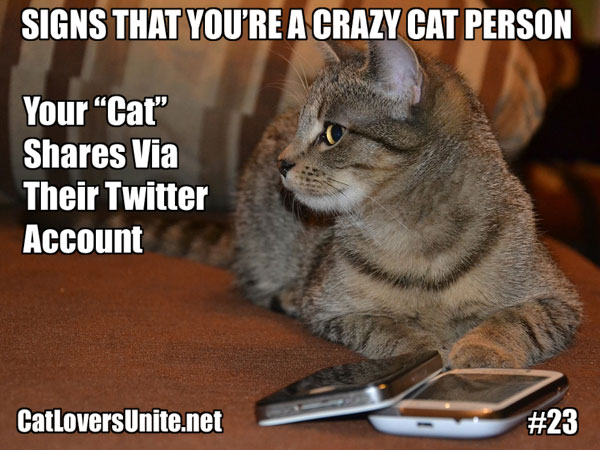 Crazy Cat Person Meme #23. For more visit: CatLoversUnite.net