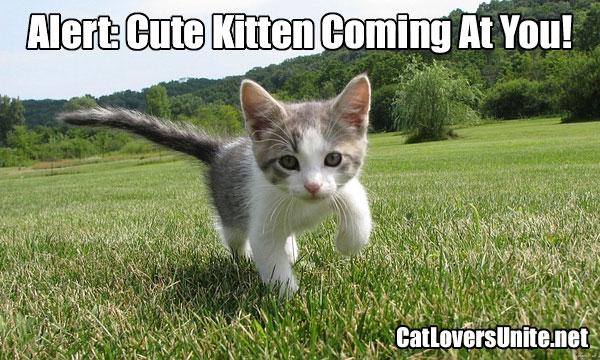 Photo meme of a cute kitten