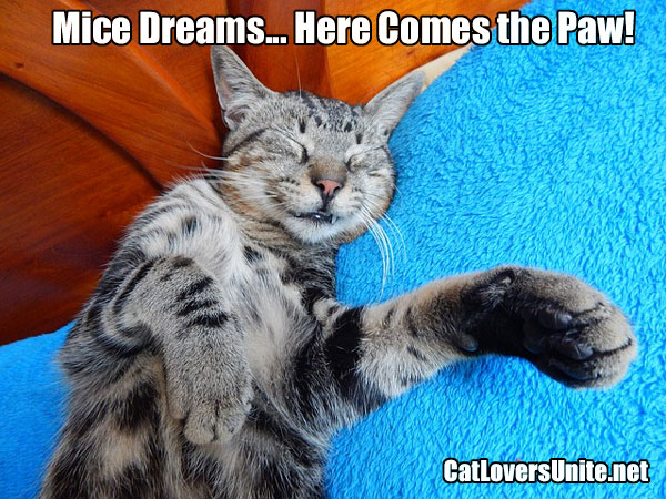 Photo of a dreaming cat