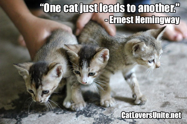 Hemingway Cat Quote - for more cat quotes visit: CatLoversUnite.net