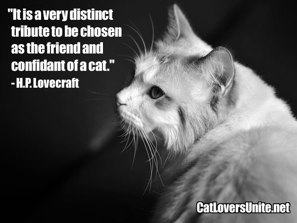 Cat Quote by H.P. Lovecraft