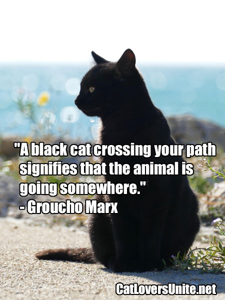 Groucho Marx Quote About Black Cats
