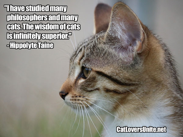 Taine quote about philosophers vs cats