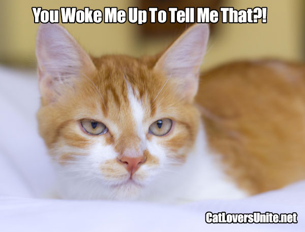 Photo meme of an unimpressed ginger tabby
