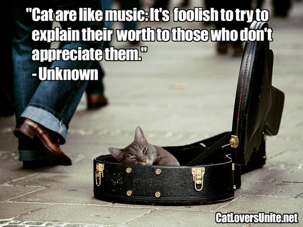 Cats are Like Music Quote