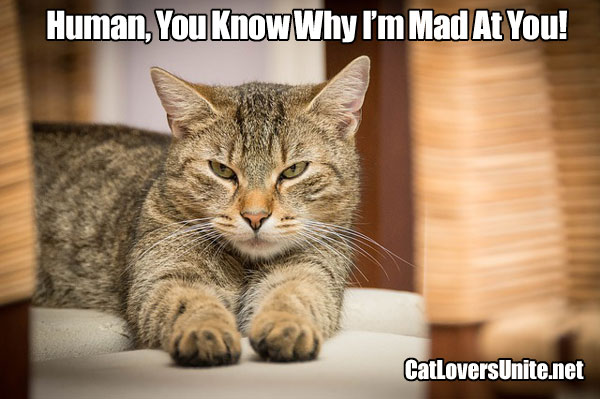 Photo meme of a displeased cat
