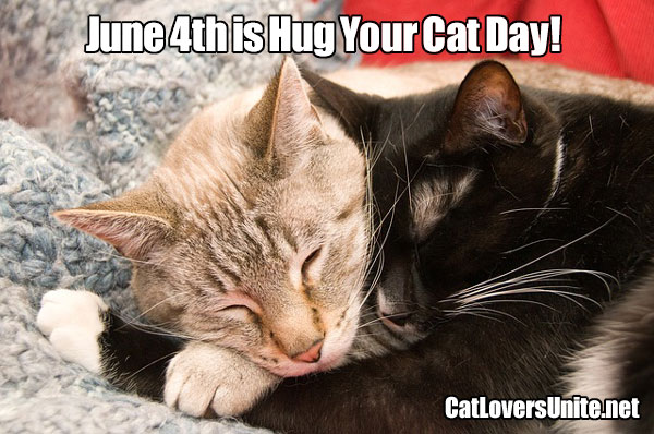 Photo for Hug Your Cat Day