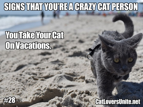 Crazy Cat Person meme #28. For more: CatLoversUnite.net