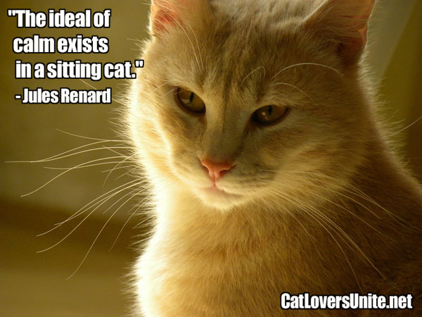 Cat Quote by Renard. For more: CatLoversUnite.net