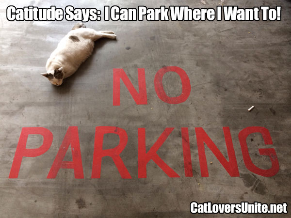 Cat sleeping in a no parking space