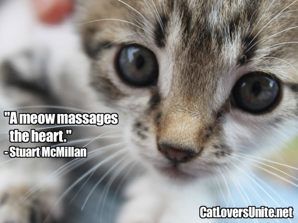 Cat Quote by Stuart McMillan