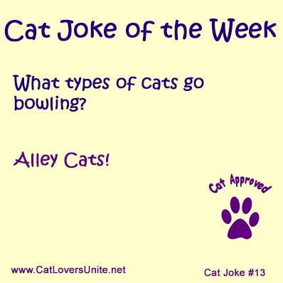 Cat Joke #13