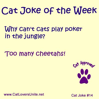 Cat Joke #14