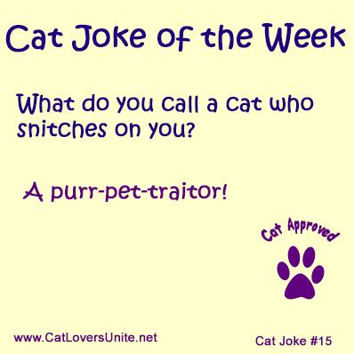 Cat Joke #15