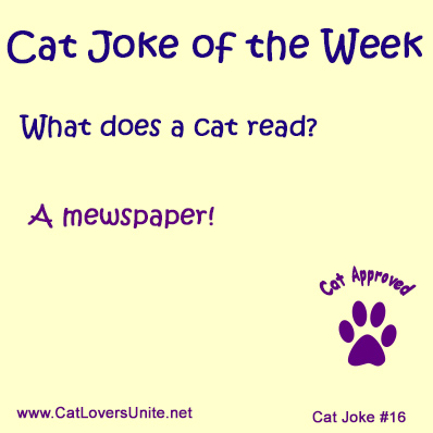 Cat Joke #16