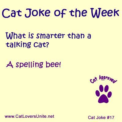 Cat Joke #17