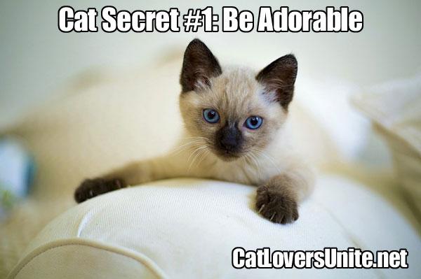 Cat Secret #1