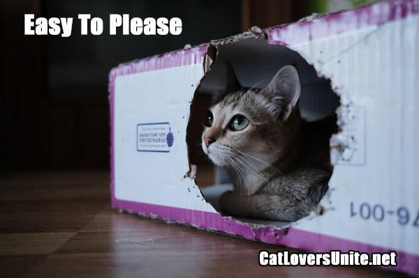 Cat in a box with a hole