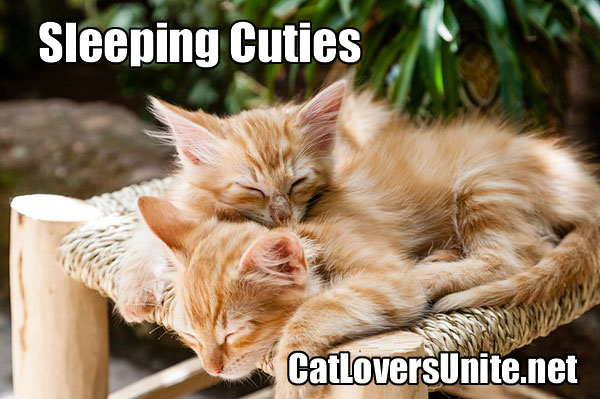 Cute photo of kittens sleeping