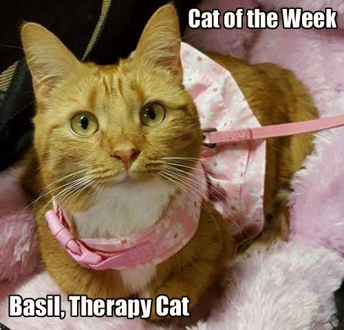 Basil the Therapy Cat