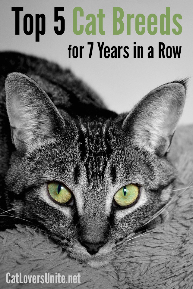 Top 5 Cat Breeds graphic